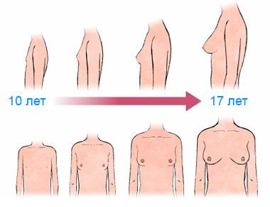 Стадии роста грудных желез у девочек